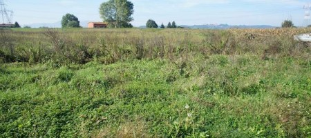 Terreno Agricolo nel Comune di Pescia (PT)