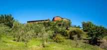 Tenuta Agricola a Montecarlo (LU)